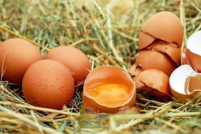 œuf-frais