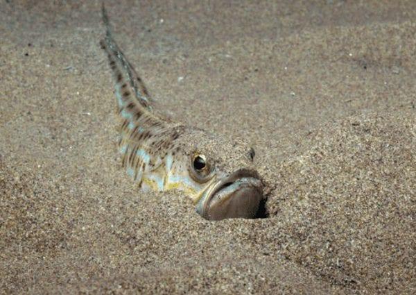vive-cachee-sable