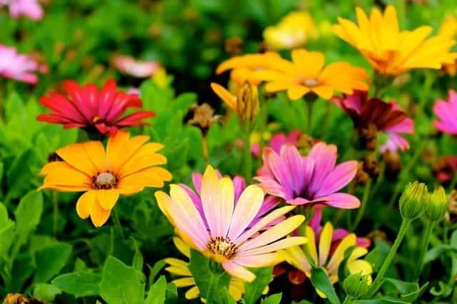 Transformez votre jardin en une source de tranquillité en suivant ces conseils !