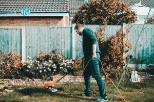 tonte-pelouse-entretien
