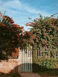 fleurs-bulbes