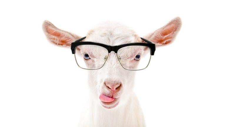 lait-de-chèvre