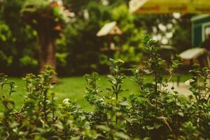 décoration-jardin